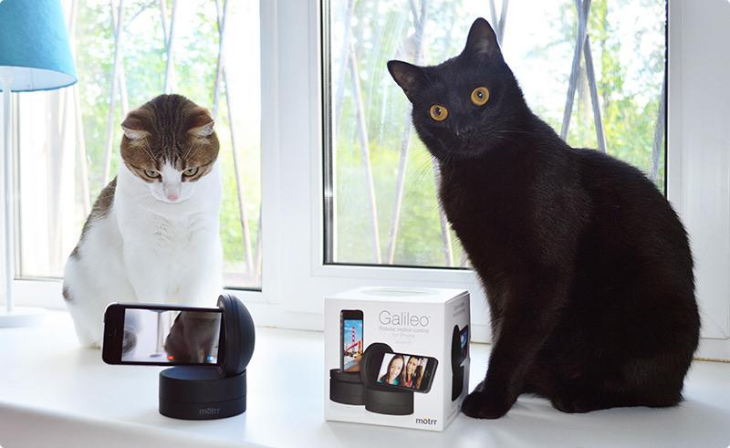 Galileo и котики