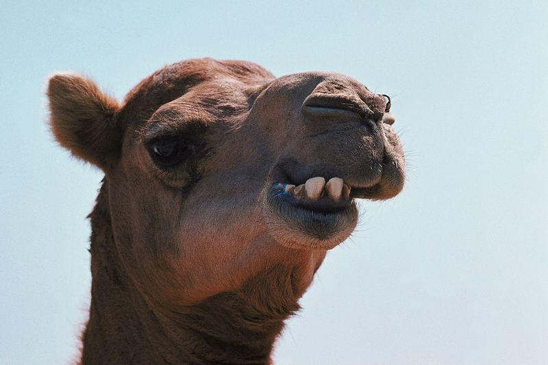 Перетягивание «Верблюда» или интеграция средствами Camel. Часть 1
