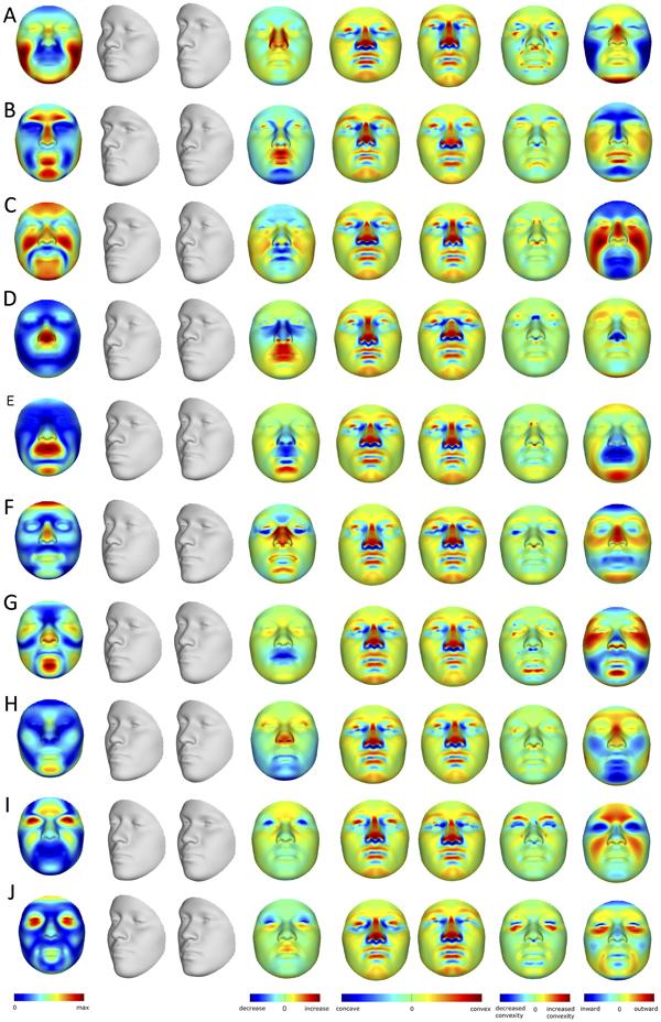3D моделирование формы лица по генам человека