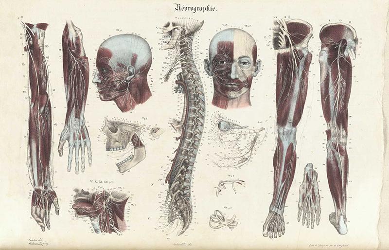 Курсы анатомии с картинками