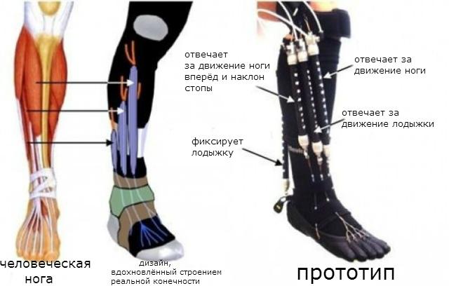Экзоскелеты в медицине