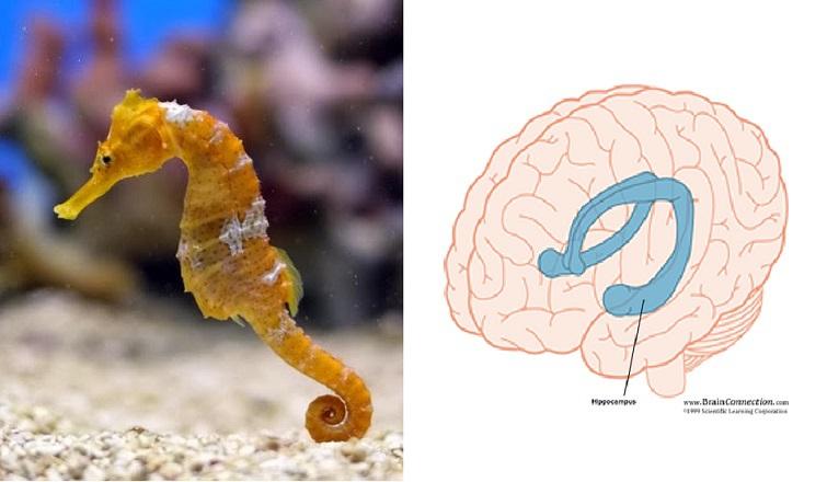 Код мозга и память. Загадка гиппокампа