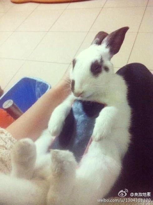 Любимыми телефонными «чехлами» японцев являются живые кролики