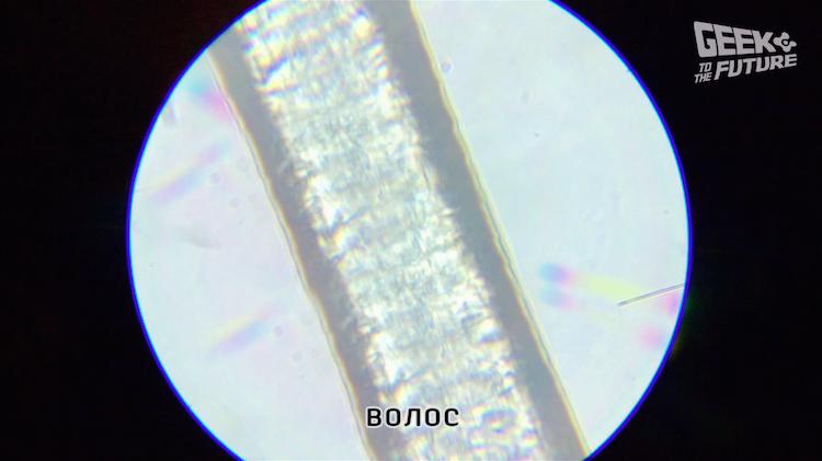 MicrobeScope: таращимся на инфузорий - 7