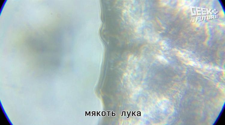 MicrobeScope: таращимся на инфузорий - 9