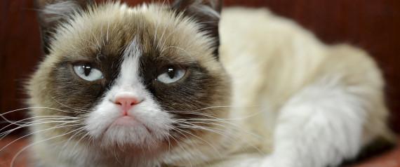 «Сердитая кошка» заработала уже миллионы долларов (до $100 млн) - 1