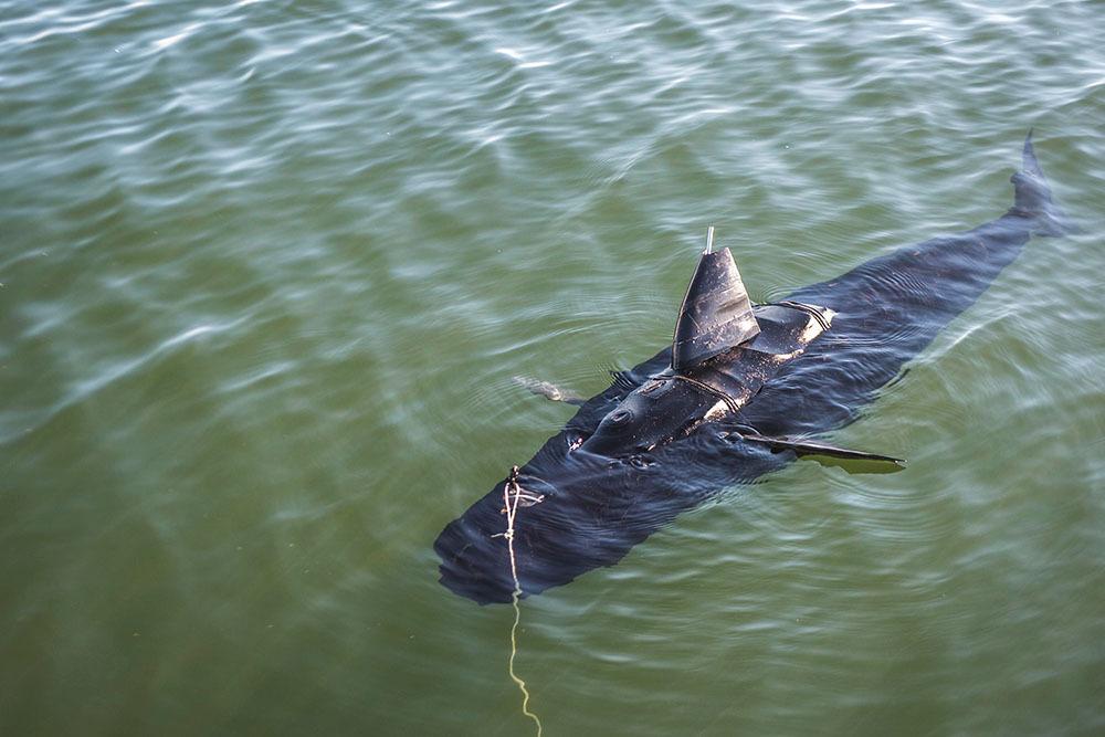 Акула-робот ВМС США - 1