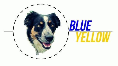 Зрение у собак не черно белое,   ученые