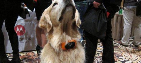 В США разработали собачий смартфон ошейник