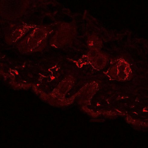 Опубликованы самые подробные изображения нервов (ФОТО)