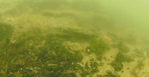 Дайверы нашли затопленный лес ледникового периода (ВИДЕО)