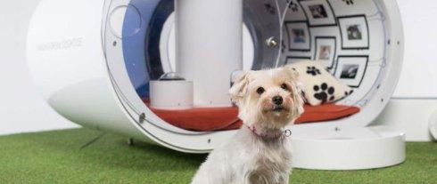 Samsung разработала собачью будку за $30 000 (ВИДЕО)