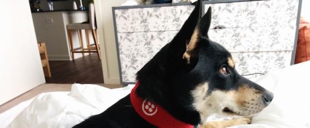 Собака научилась делать селфи с помощью Arduino - 1