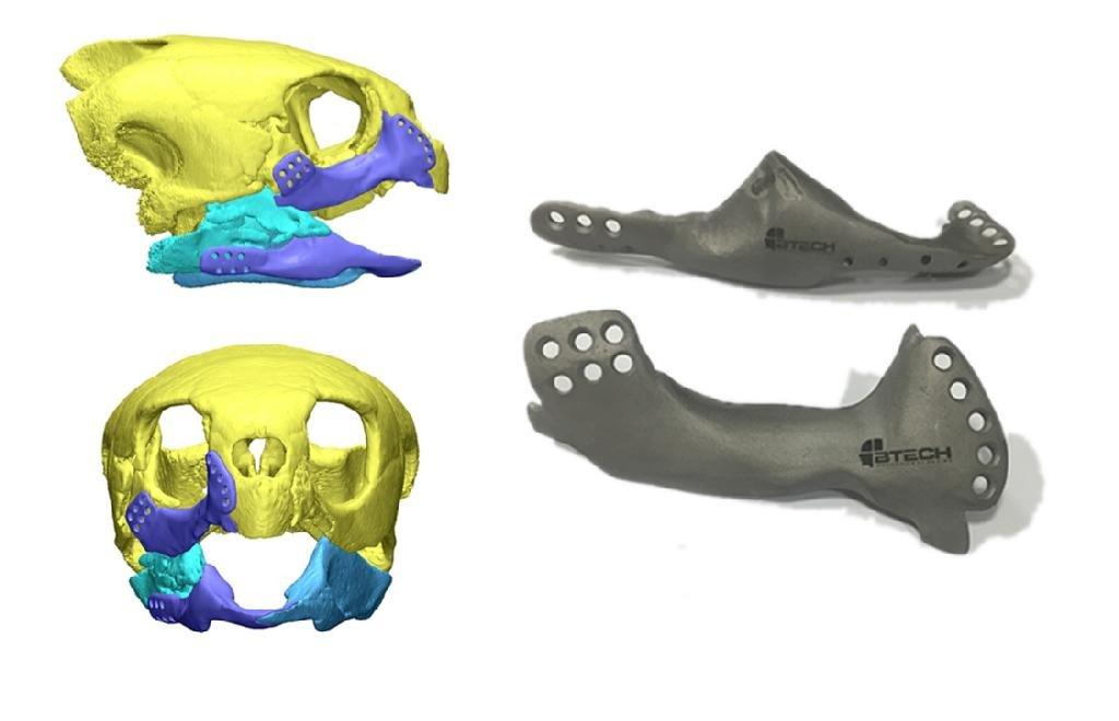 Морская черепаха с сильно поврежденными челюстями получила титановые протезы, отпечатанные на 3D-принтере - 1