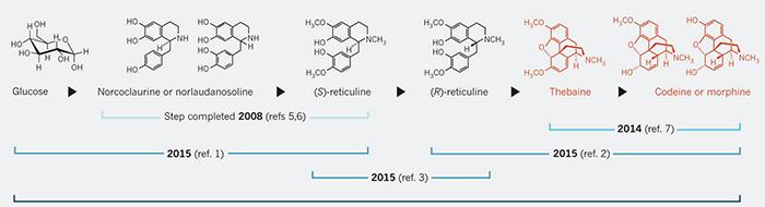 Созданы дрожжи, которые синтезируют морфин из глюкозы - 2