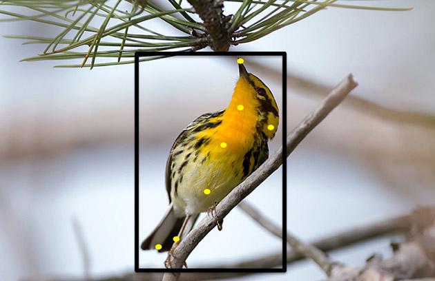 Сервис от Корнеллского университета определяет вид птиц по фотографии - 1