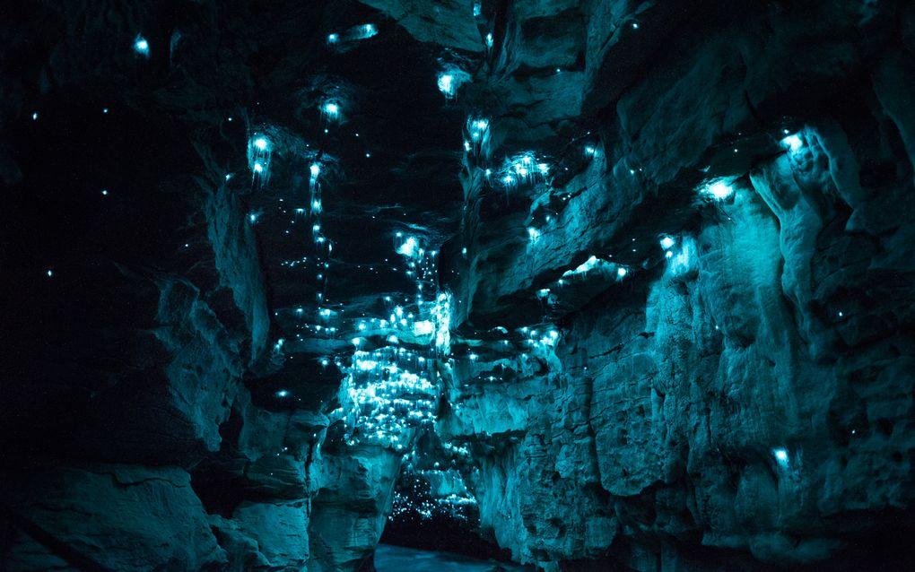 Биолюминесценция в действии: пещерный червяк из Новой Зеландии превращает пещеры в восьмое чудо света - 11