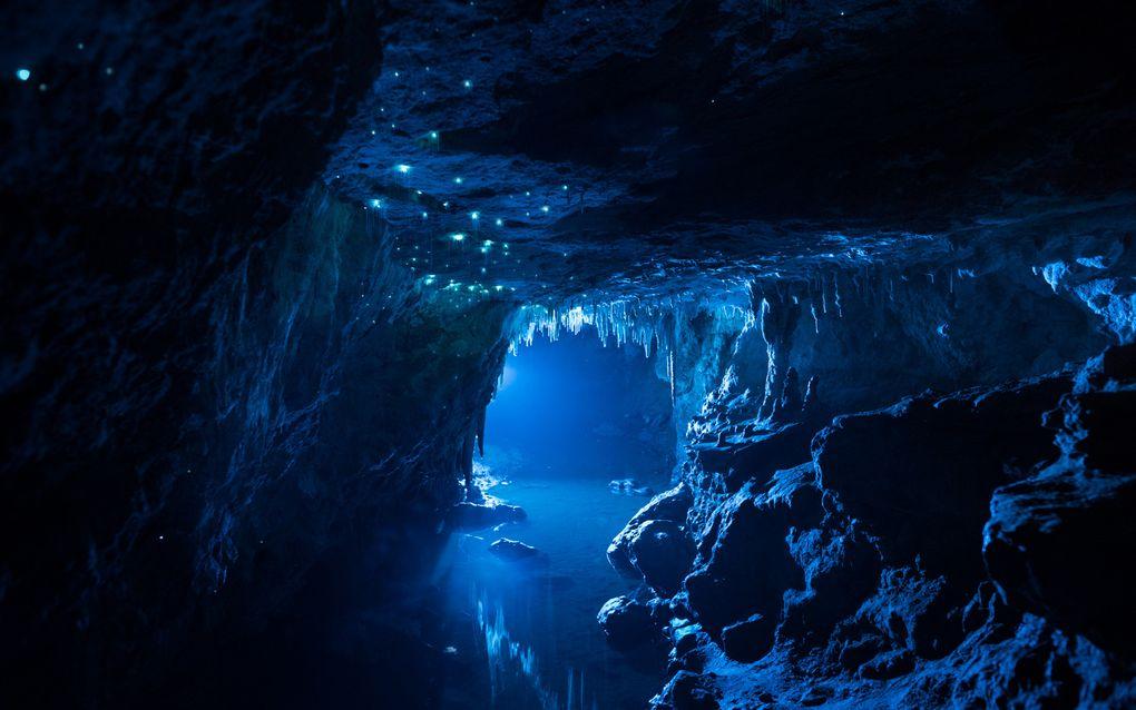 Биолюминесценция в действии: пещерный червяк из Новой Зеландии превращает пещеры в восьмое чудо света - 4