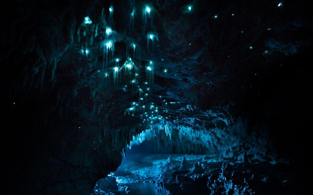 Биолюминесценция в действии: пещерный червяк из Новой Зеландии превращает пещеры в восьмое чудо света - 6