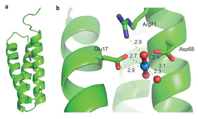 Создан белок для добычи урана из морской воды - 2