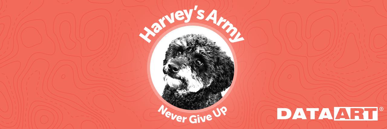 Never give up: ищем пропавших животных с DataArt - 1