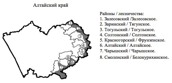 Пихтовые леса Сибири уничтожают жуки размером два миллиметра - 11
