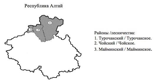 Пихтовые леса Сибири уничтожают жуки размером два миллиметра - 12