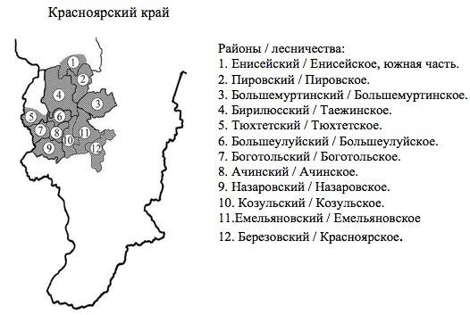 Пихтовые леса Сибири уничтожают жуки размером два миллиметра - 13