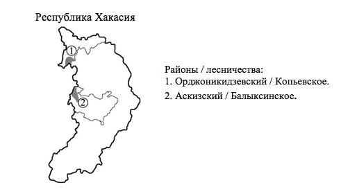 Пихтовые леса Сибири уничтожают жуки размером два миллиметра - 14