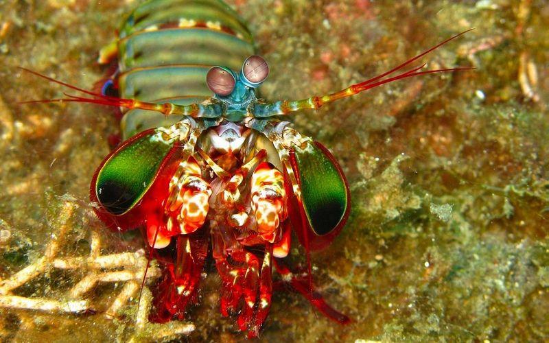 Ученые узнали о необычной форме общения морских животных при помощи поляризованного света - 1