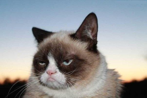 Сердитый котик судится с производителем кофе из-за нарушения копирайта - 1