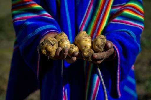 NASA попробует вырастить картофель по методу «Марсианина» в перуанской пустыне - 3