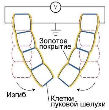 Бионическая инженерия: первые ростки - 4