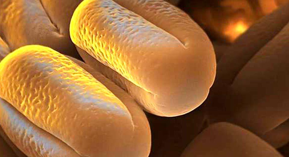 Сколько пыльцы в воздухе и какая пыльца вызывает аллергию - 10
