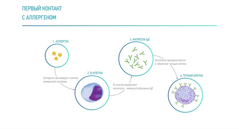 Как возникает аллергия на пыльцу и при чем тут аскариды - 3