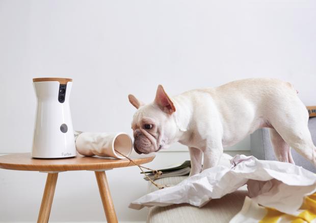 Камера Furbo предназначена для владельцев собак