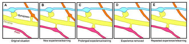 О проблеме one-shot обучения для нейросетей - 2