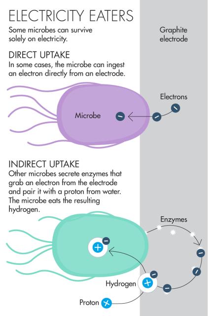 Обнаружено новое живое существо, которое питается электронами - 4