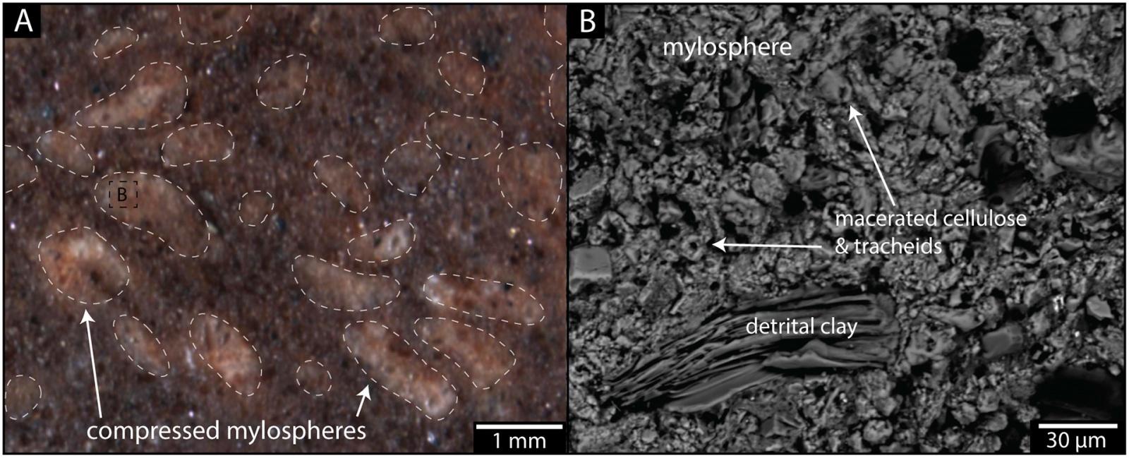 Термиты освоили сельское хозяйство на 25 млн лет раньше людей - 4