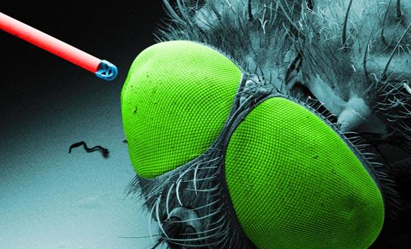 Одной из областей применения микроскопических объективов названа медицинская техника