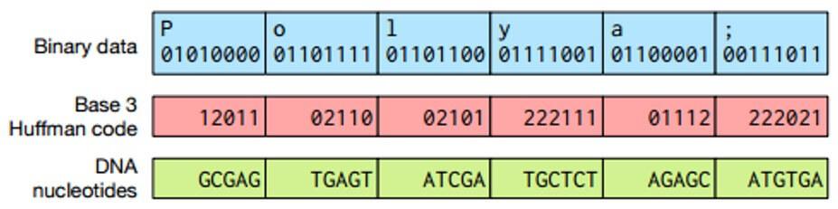 «Заложено природой»: Система хранения данных на основе ДНК - 3