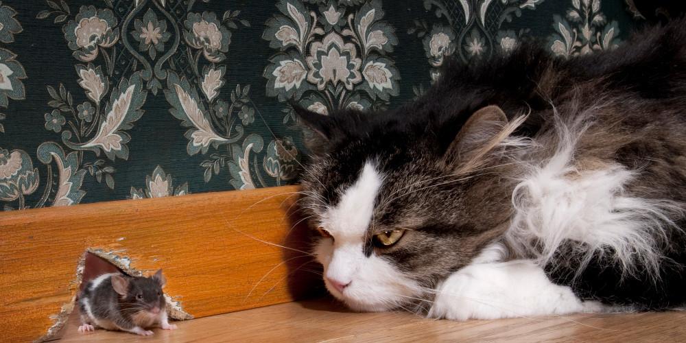 Игра в кошки-мышки: как создавался антиспам в Почте Mail.Ru и при чем здесь Tarantool - 1