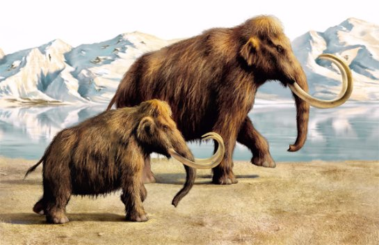 Некоторые ученые против клонирования мамонтов