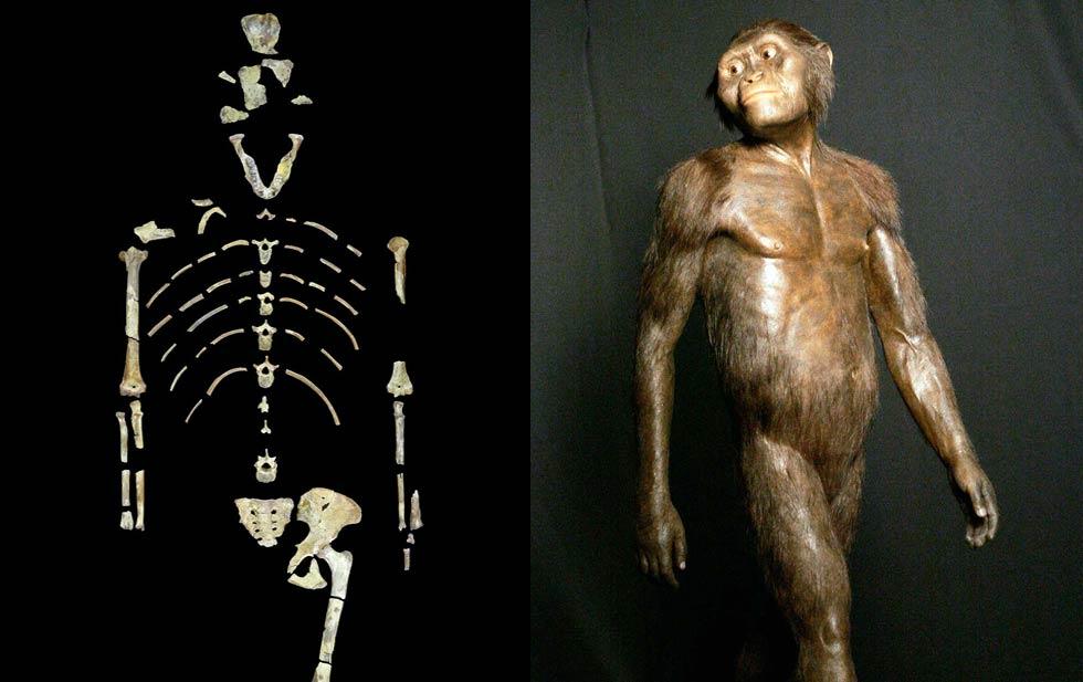Предок человека австралопитек Люси могла погибнуть при падении с дерева - 1