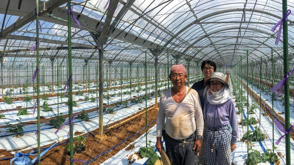 Как японский фермер при помощи глубокого обучения и TensorFlow огурцы сортировал - 1
