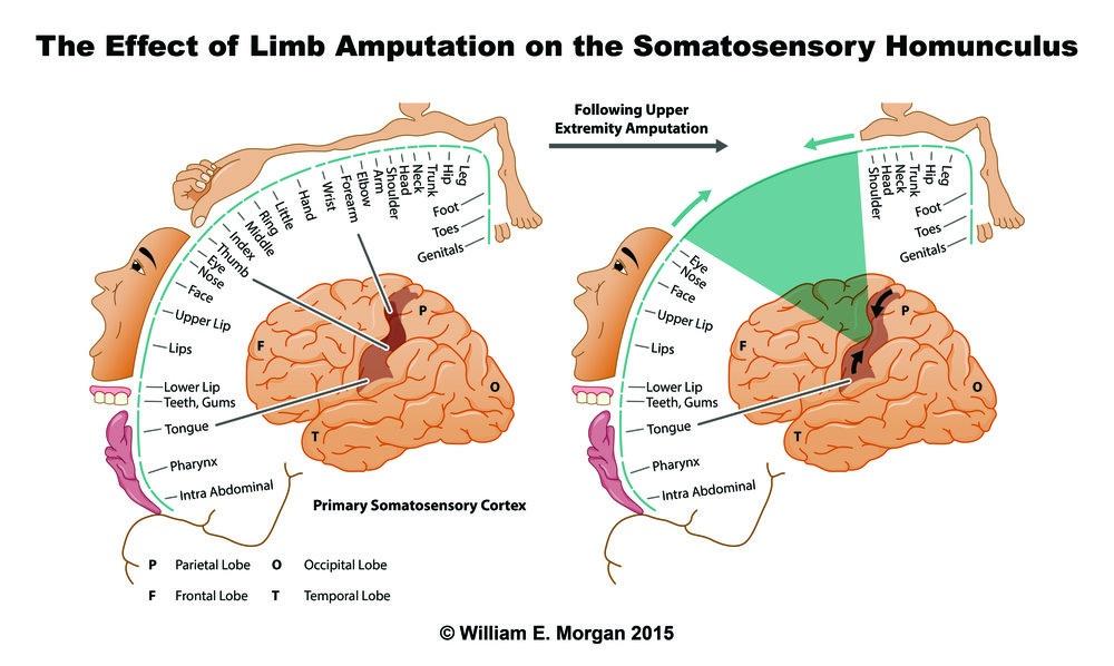 Нейропластичность: перестраиваем мозг - 5