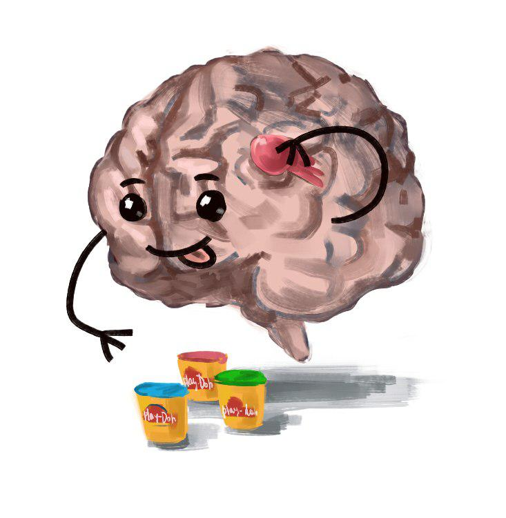 Нейропластичность: перестраиваем мозг - 1