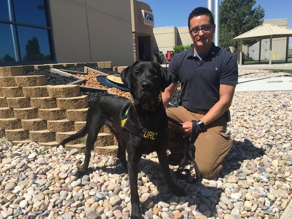 Полицейские США используют собак для поиска спрятанных цифровых носителей информации - 1