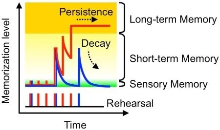 Память, консолидация памяти и бабушкины нейроны - 2