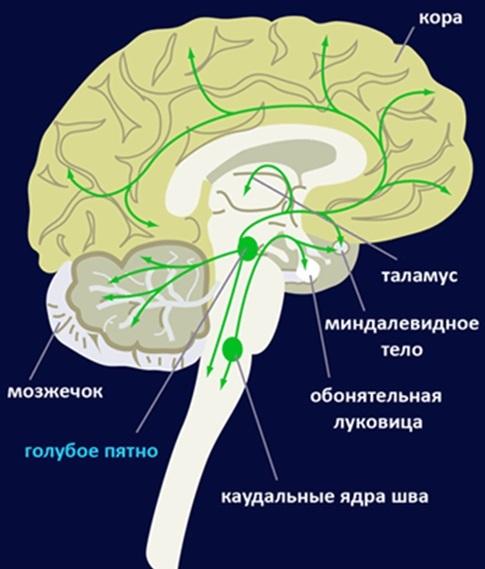 Память, консолидация памяти и бабушкины нейроны - 9